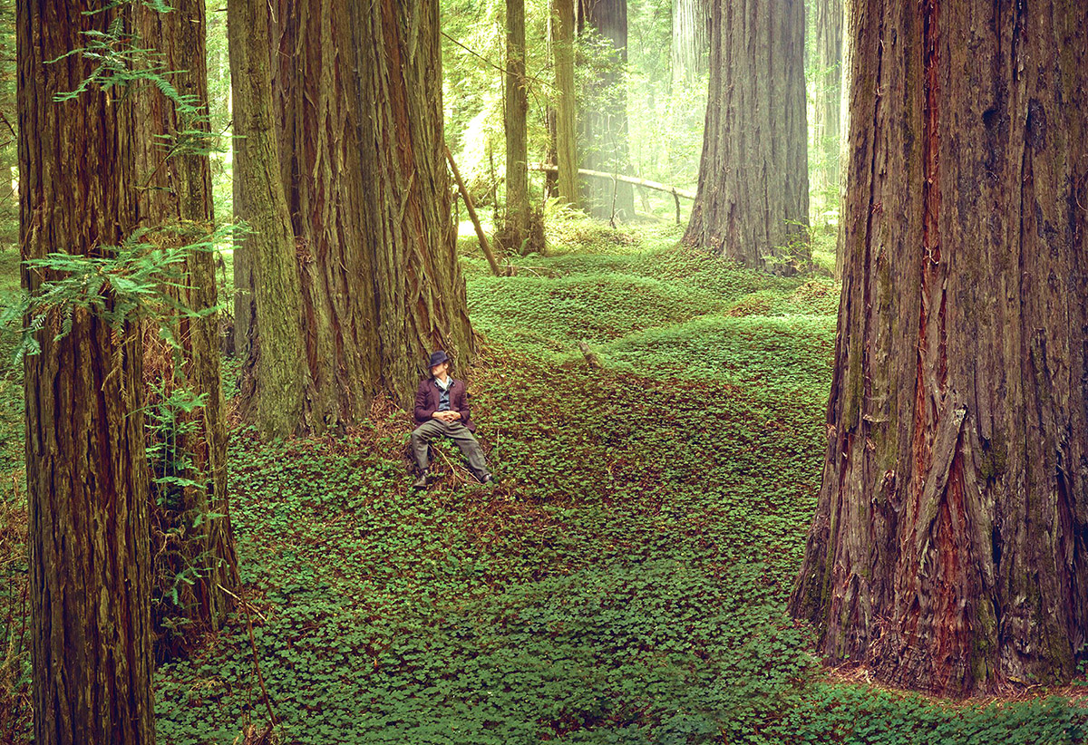 Ten Must-See Redwood Trees