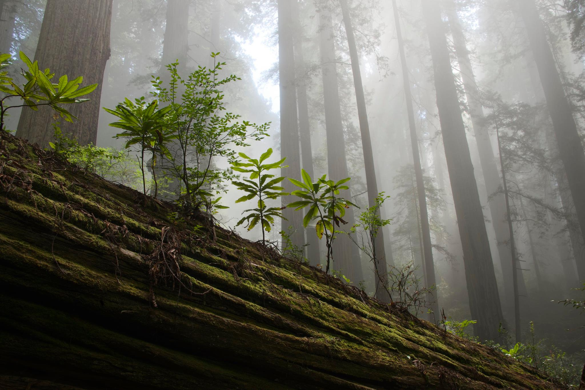 Lonely Planet Names Our Redwood Coast #1 U.S. Destination