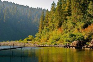 Jedidiah Smith Redwoods State Park