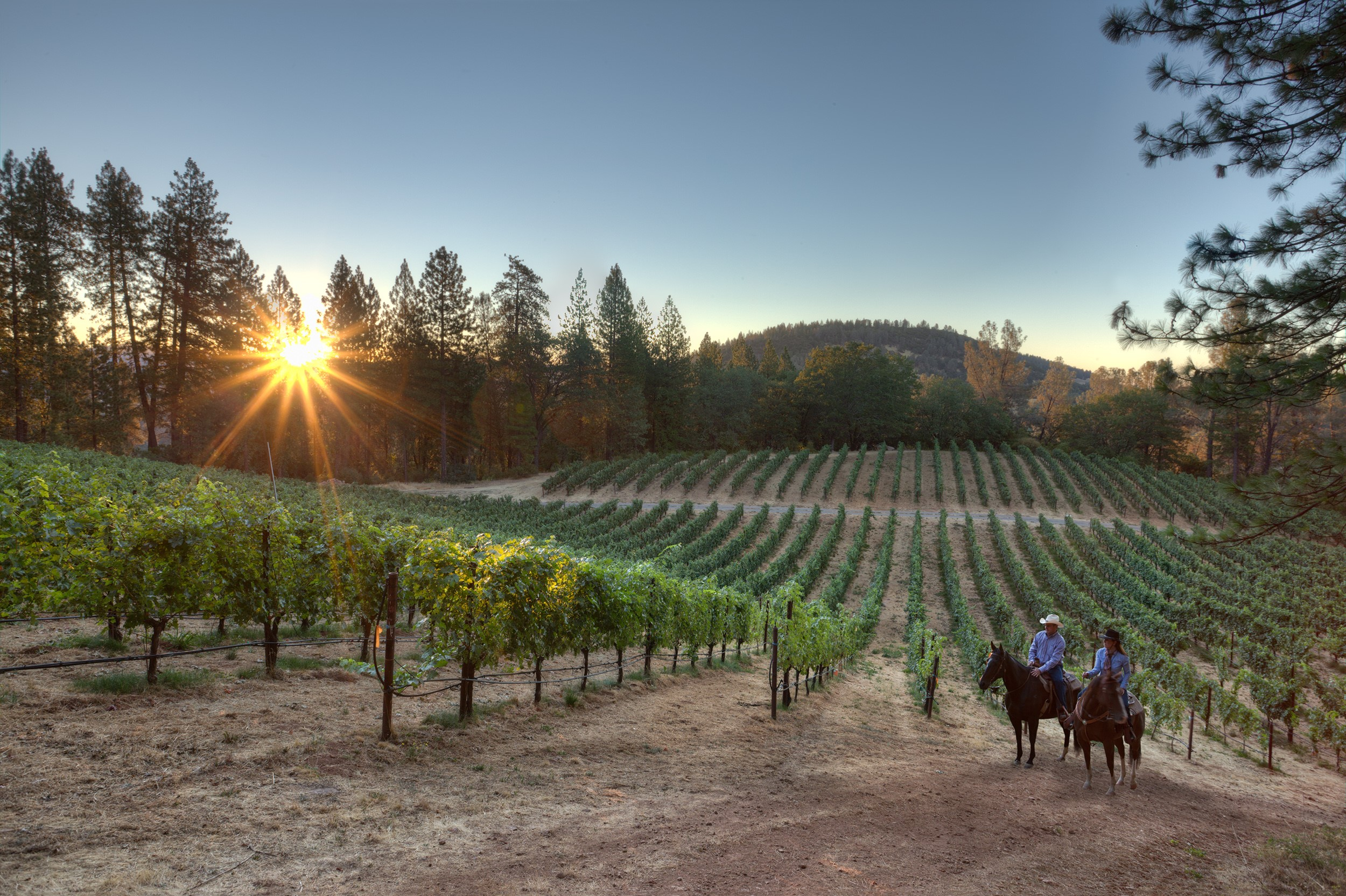 Lake & Mendocino County Wines Share a Passion