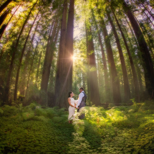 Humboldt County Wedding