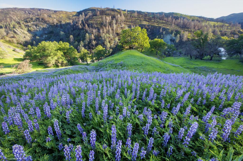 Wildflowers of the North Coast region of Northern California.