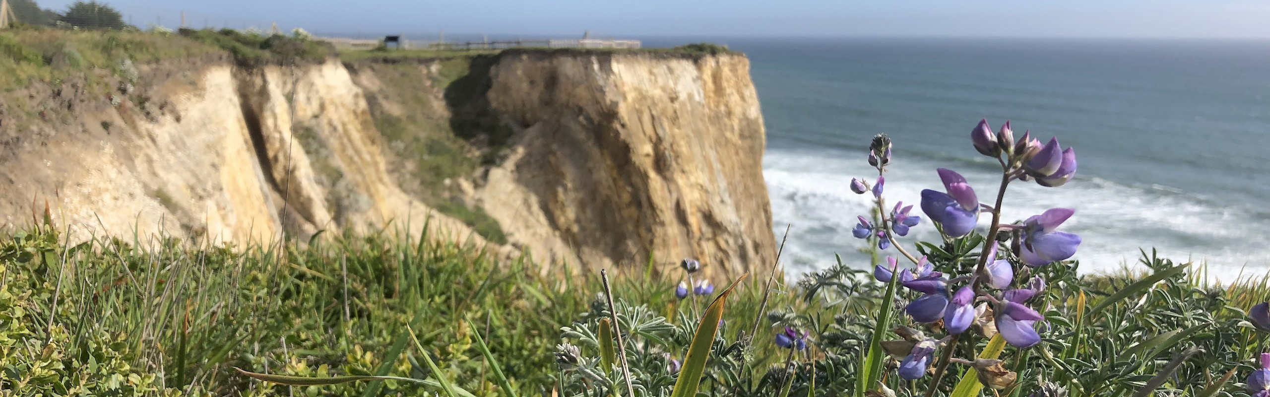 Wildflowers on the North Coast